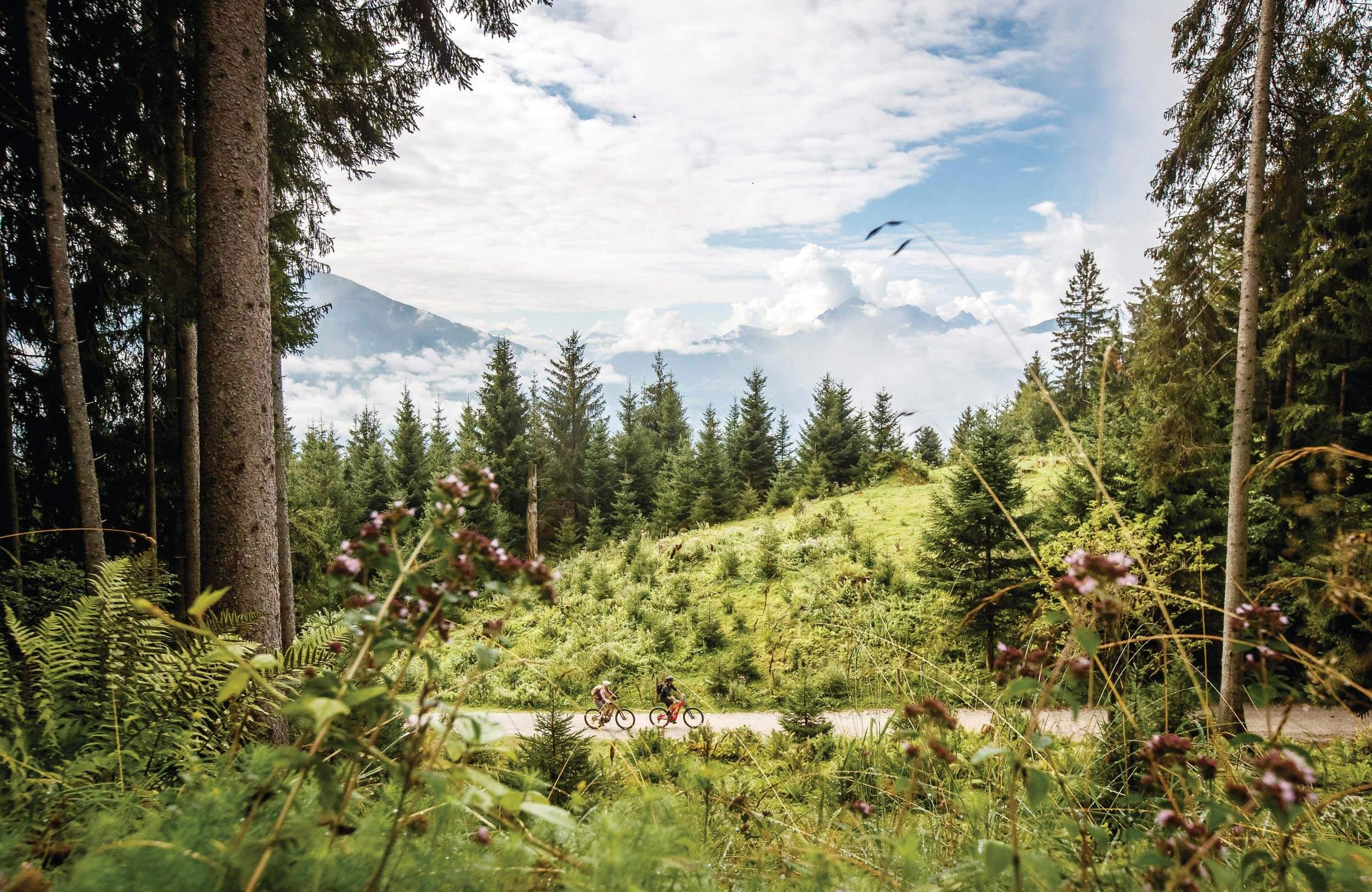 Waldspaziergang Innsbruck Tirol, Downhill, Mountainbike